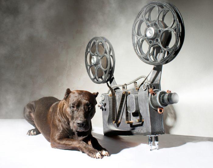 Några Kända Och Berömda Hundar