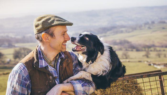 Om Hundar Och Ledarskap