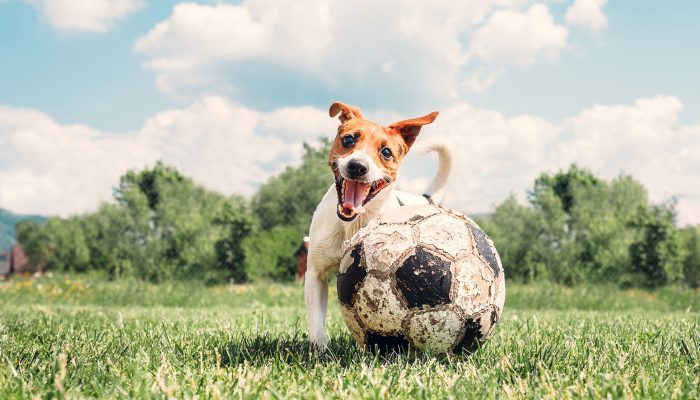 Allmänt Om Hundens Historia