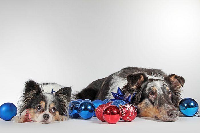 Två Hundar Samtidigt – En Utmaning