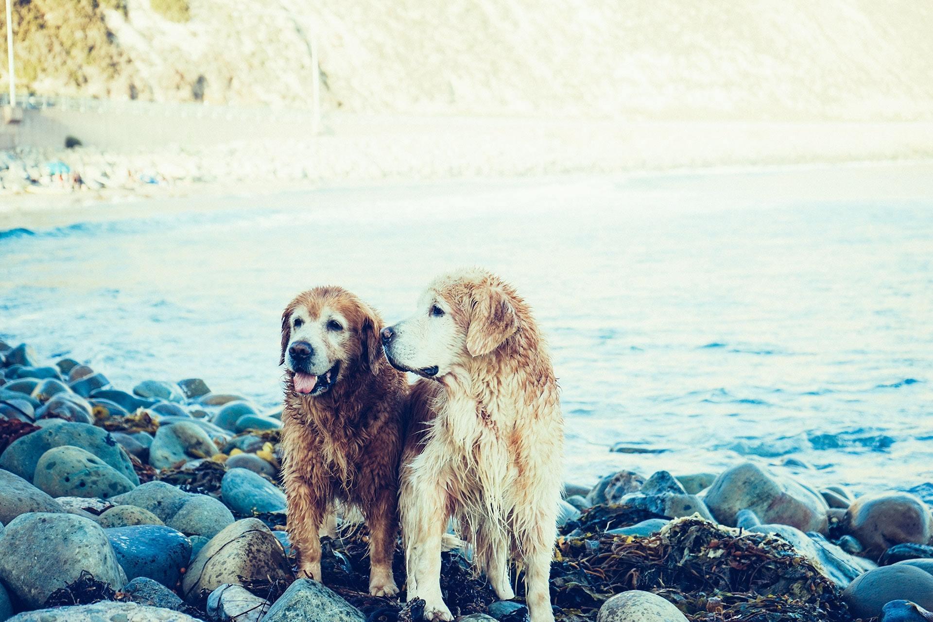 Hitta Hundförsäkring