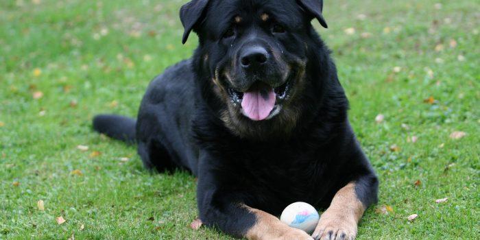 Dog 1361477.jpg