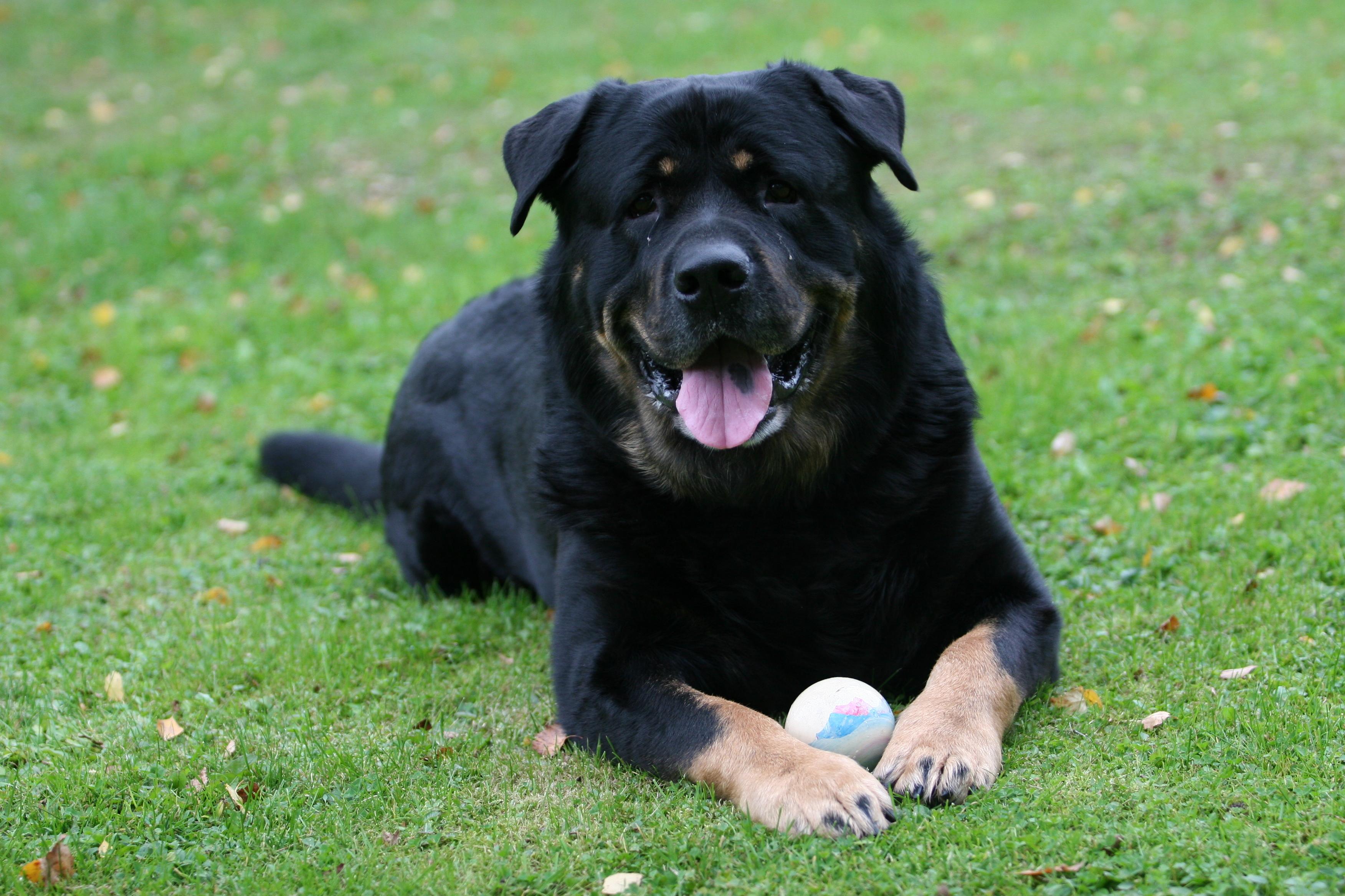 Vad Det Innebär Att Köpa En Hund